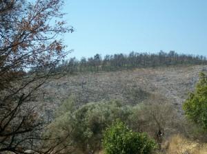 Κατεστραμμένες δασικές εκτάσεις
