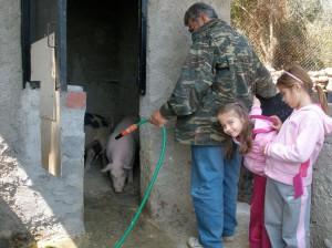 Ο Γεώργιος Δ. Δούνας ποτίζει τα γουρούνια του στον Σαράντη, παρέα με τις εγγονές του, Αλίκη και Μαρία Γκιτέρσου